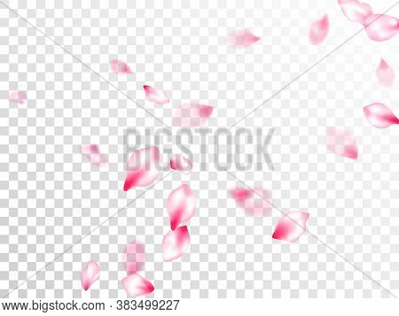 Spring Blossom Isolated Petals Flying On Transparent Background. Japanese Cherry Flower Parts Fallin