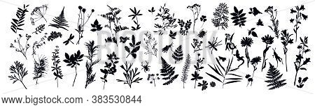 Set Of Silhouettes Of Botanical Elements And Insects. Herbarium. Grass, Flowers, Wild Plants. Beetle