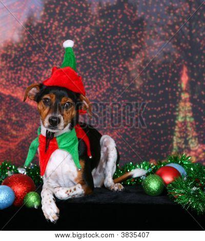 Christmas Danish Swedish Farm Dog