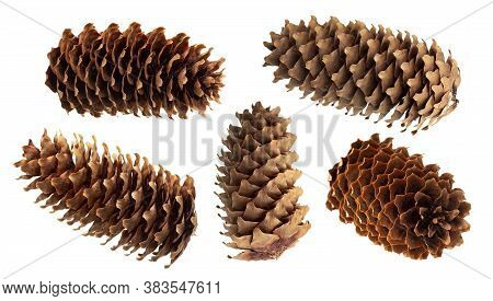 Fir Cone Isolated On White Background With Clipping Path