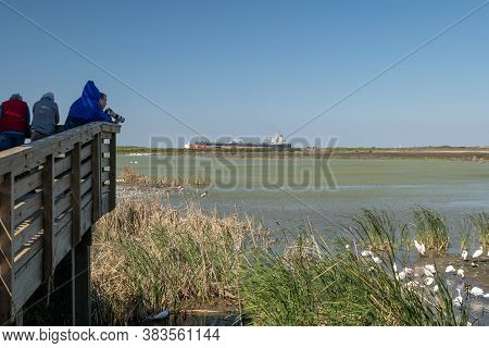 Port Aransas, Tx - 13 Feb 2020: Photographers And Ornithologists Looking At Birds In Wetland At The