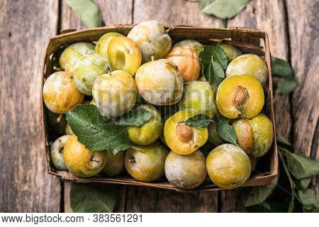 Ripe  Yellow  Plum Fruits Harvested In A Bascket. Ripe  Yellow  Plum Fruits Harvested In A Basket. P