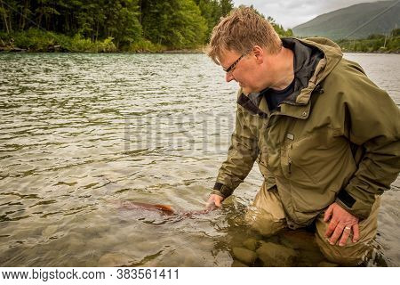 A Fisherman Releasing A Sockeye Salmon Back Into The Kitimat River, While Wading, In British Columbi