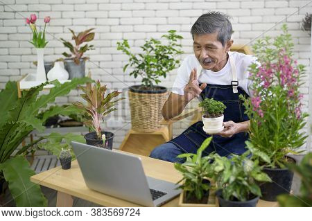 Senior Man Entrepreneur Working With Laptop Presents Houseplants During Online Live Stream At Home,