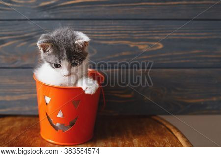 Cute Kitten Sitting In Halloween Trick Or Treat Bucket On Black Wooden Background. Jack O' Lantern P