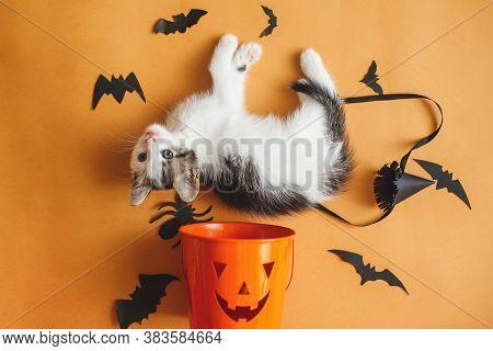 Happy Halloween. Cute Kitten Playing With Halloween Trick Or Treat Bucket And Black Bats On Orange B