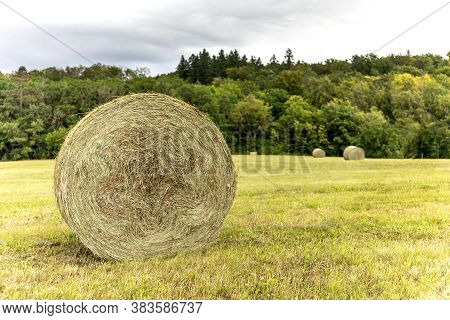 Hay In Large Bales On The Field, Nature. Round Hay Bale On A Field. Collection Of Dry Grass. Cloudy