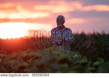 Portrait Of Confident And Satisfied Mature Farmer Standing With Crossed Arms In Agricultural Field A