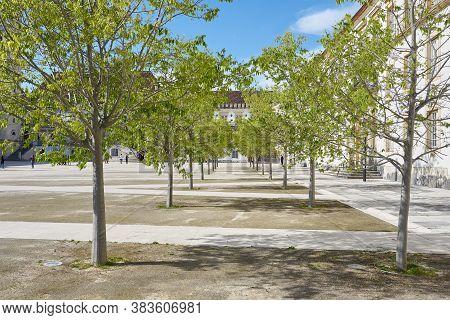 Coimbra, Portugal - April 4, 2019: Coimbra University Garden Trees, In Portugal