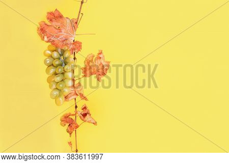 Dried Autumn Branch Of Grapes With Orange Brown Leaves And A Bunch Of Green Ripe Grapes On A Yellow