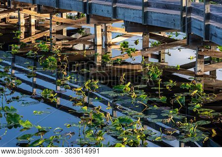 Bridge Supports Mirror In Still Water In Everglades Swamp