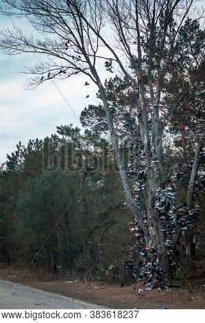 Shoe Tree Along Highway 131 In Michigan During The Winter