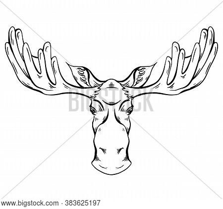 Contour Engraving Illustration Of A Moose Head With Antlers Front View With Hatching. Wild Mammal. V