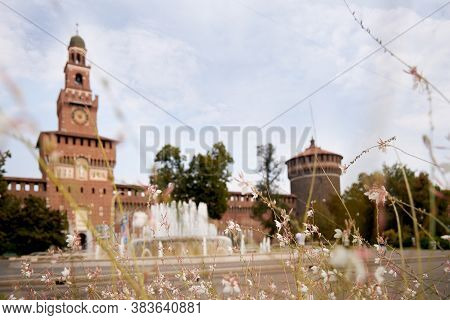 Small Flowers, Against The Background Of Castello Sforzesco. Milan Italy 08.2020