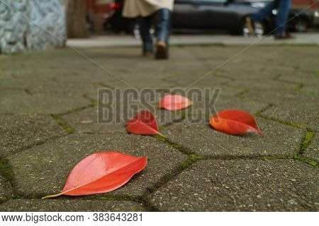 Red Autumn Leaves Fallen On The Pavement With Blurry Woman's Legs Walking Away