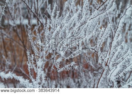 Frosty White Ornaments Made Of Snow On The Branches Of Trees. The Frost On The Bushes And Plants. Wo