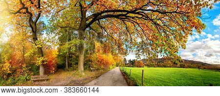 Beautiful Rural Landscape In Autumn, A Panoramic Scenery With A Pathway Leading Under Colorful Branc