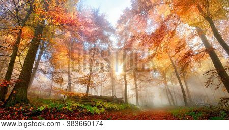 Enchanting Rays Of The Sun Fall Through Wafts Of Mist In A Forest, A Gorgeous, Dreamy And Vibrant Au