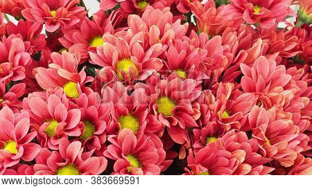 Many Flowers In A Flower Shop. Beautiful Summer Flowers As Background. Blossoming Delicate Roses On