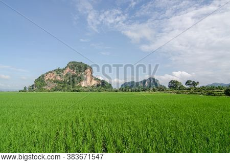 Green Paddy Field With Limestone Hill Under Blue Sky.