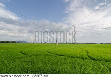 Paddy Field With Electric Tower Under Blue Sky.
