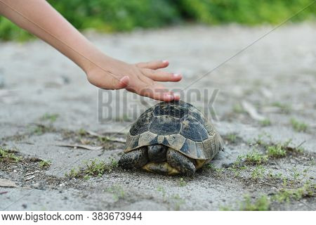Cute Hand Cautious Child's Hand Touches A Turtle Into Wildlife. Walk In The Air. You Can See The Han