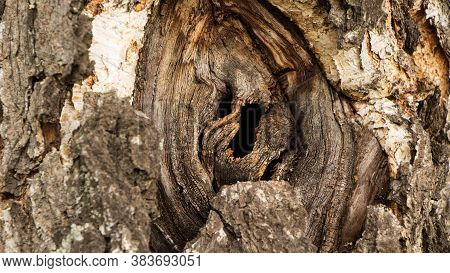 Hole In The Bark Of A Tree Close Up. Tree Trunk With Hollow. Tree Bark Texture Background. Dark Holl