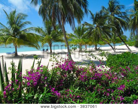 Barbados Beach  Tropical Garden