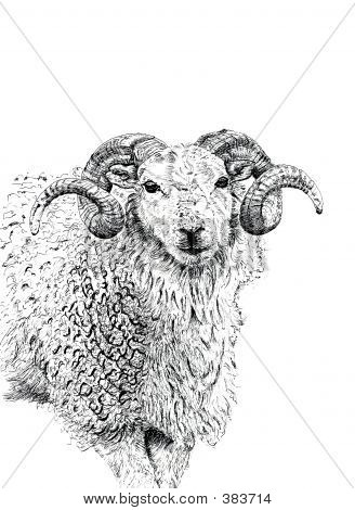 pen and ink hand drawn illustration of the face and upper body of a ram. illustration by marilyna. poster