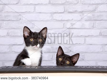 Two Kittens, One Black, One Tuxedo Black And White, Sitting At A Light Wood Table With A Black Compu