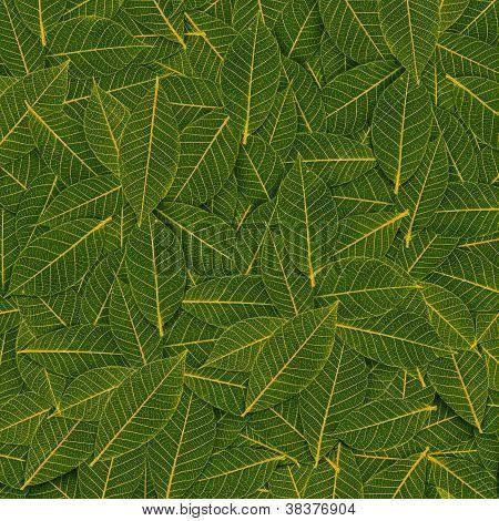 Yellow Green Transparent Leaf Pattern