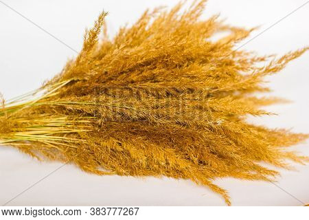 Dry Grass And Herbs Background. Beautiful Background With Silhouette Of Field Grass And Flowers. Wil