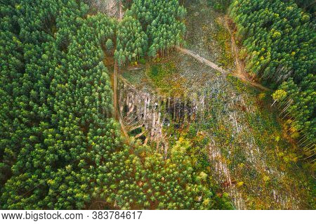 Aerial View Green Forest Deforestation Area Landscape. Top View Of Fallen Woods Trunks And Growing F