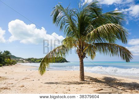 Friar's Bay On St Martin In Caribbean