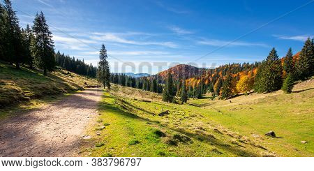 Mountain Panorama In Autumn. Forest In Fall Foliage On Top Of A Hill. Spruce Trees Along The Road Th