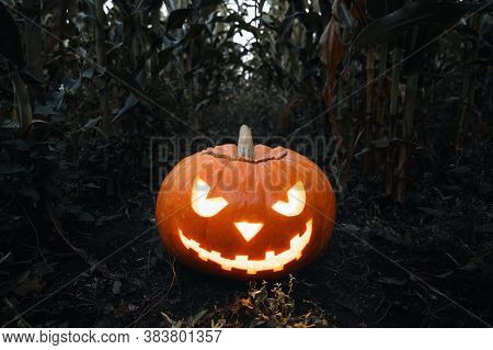 Halloween Background. Spooky Glowing Halloween Pumpkin On The Ground In A Cornfield. Twilight Time,