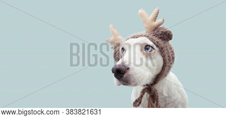 Banner Puppy Dog Celebrating Christmas With A Reindeer Antlers Hat Looking Side. Isolated On Blue Ba
