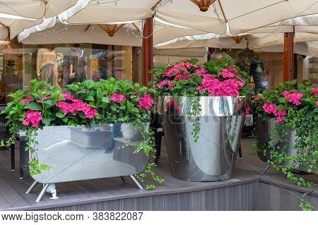 A Bright Pink Hydrangea Flower In A Giant Metal Chrome Flowerpot. Street Decoration, Fresh Flowers I