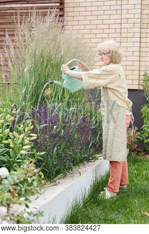 Vertical shot of active senior woman watering flowers in her backyard garden, copy space