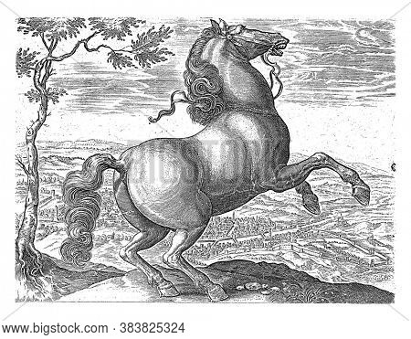 Horse from Tuscany, anonymous, after Hendrick Goltzius, after Jan van der Straet, 1624 - before 1648 A Tuscan prancing horse. In the background a walled city in a valley, vintage engraving.