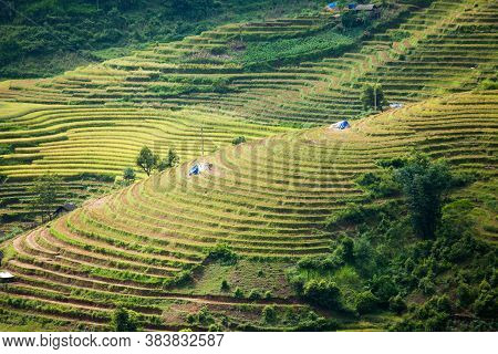 Rice fields on terraced in rainny season at SAPA, Lao Cai, Vietnam. Rice fields prepare for transpla