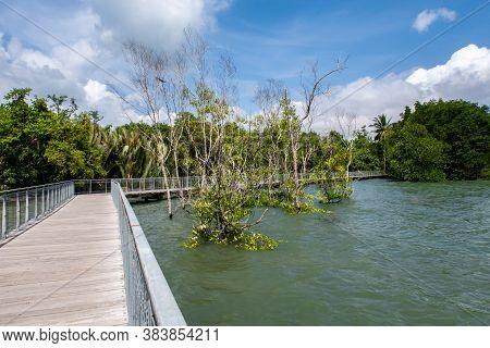 Chek Jawa Broadwalk Jetty, Wooden Platform In Mangrove Forest Wetlands Overlooking Sea On Pulau Ubin