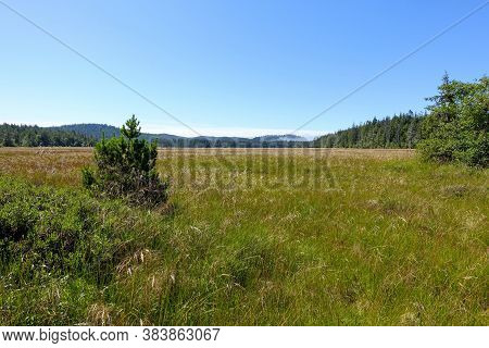 A Scenic View Of A Vast Meadow Within The Forests Of Cape Scott Provincial Park.  Golden And Green L