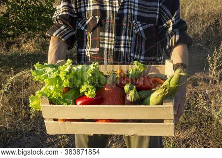 Home-grown Vegetables. Fresh Organic Vegetables. Vegetables From The Garden. Colorful Vegetable. Hea
