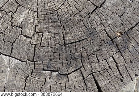 Old cracked tree stump texture. Natural wooden background.