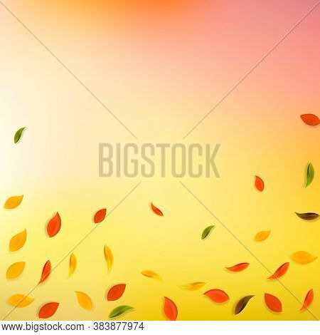 Falling Autumn Leaves. Red, Yellow, Green, Brown Random Leaves Flying. Falling Rain Colorful Foliage