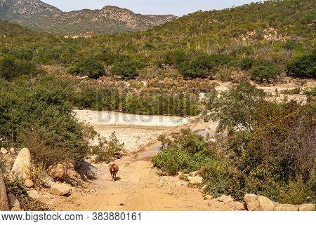 Baja California Sur, Mexico - November 23, 2008: Dry Forests Of Sierra De La Laguna. Landscape With