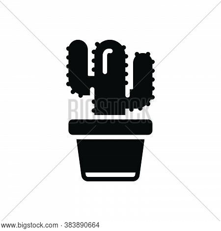 Black Solid Icon For Cactus Carnival Desert Plant Thorn Forest Latin Mexican Nature Natural Green