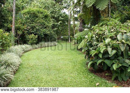 Beautiful Tropical Rainforest Garden In Far North Queensland