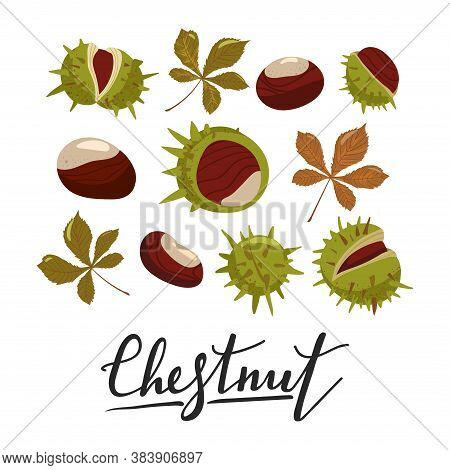 Set Of Chestnuts, Leaves And Peels. Design Elements For Fabric, Poster, Packaging, Banner And Wrappi